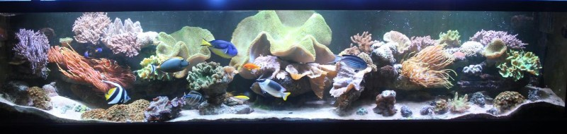FTS tank only (Medium)